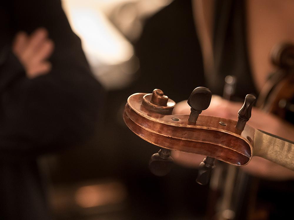 Eine Geigenschnecke im Anschitt.